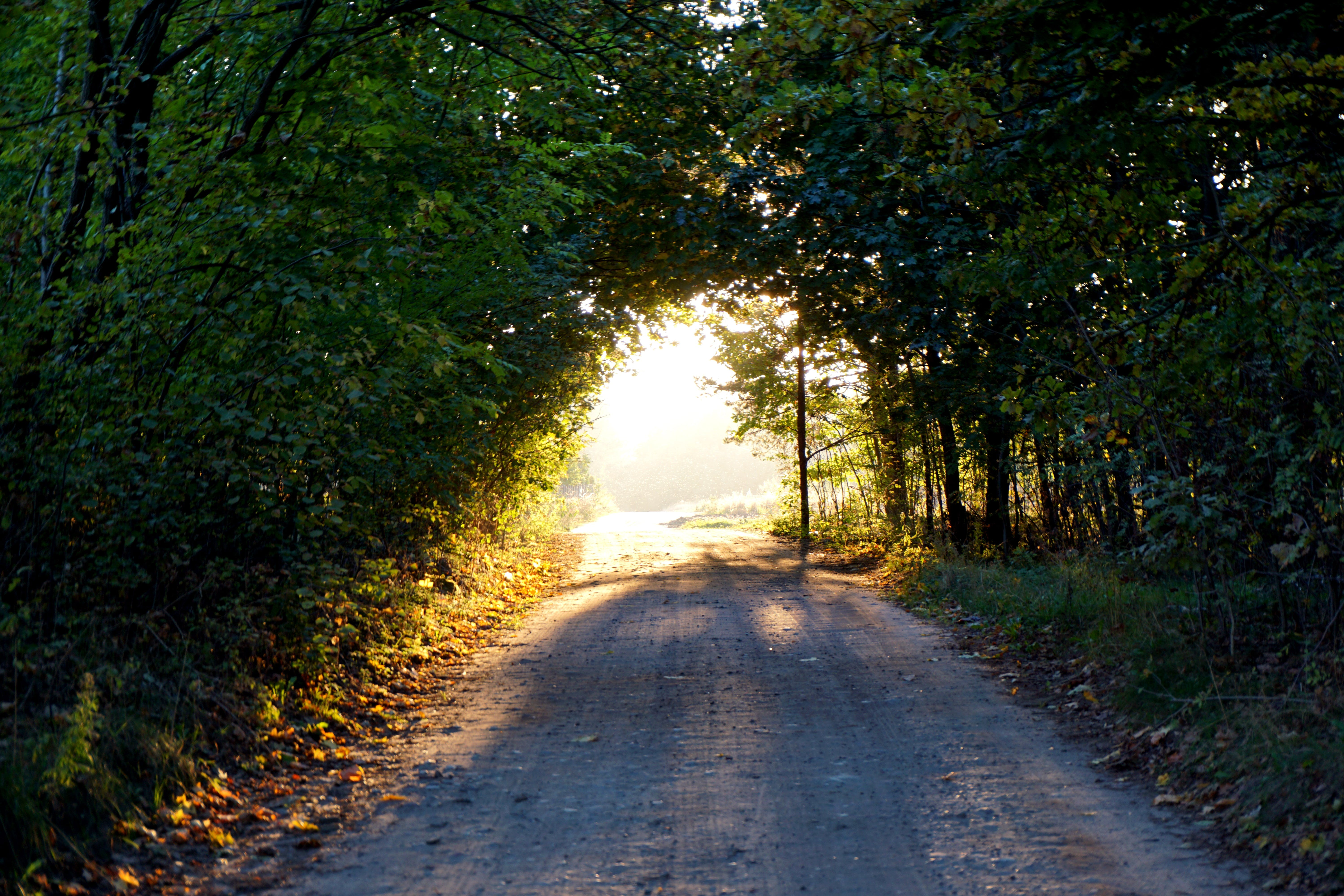 Free stock photo of road, nature, sun, forest