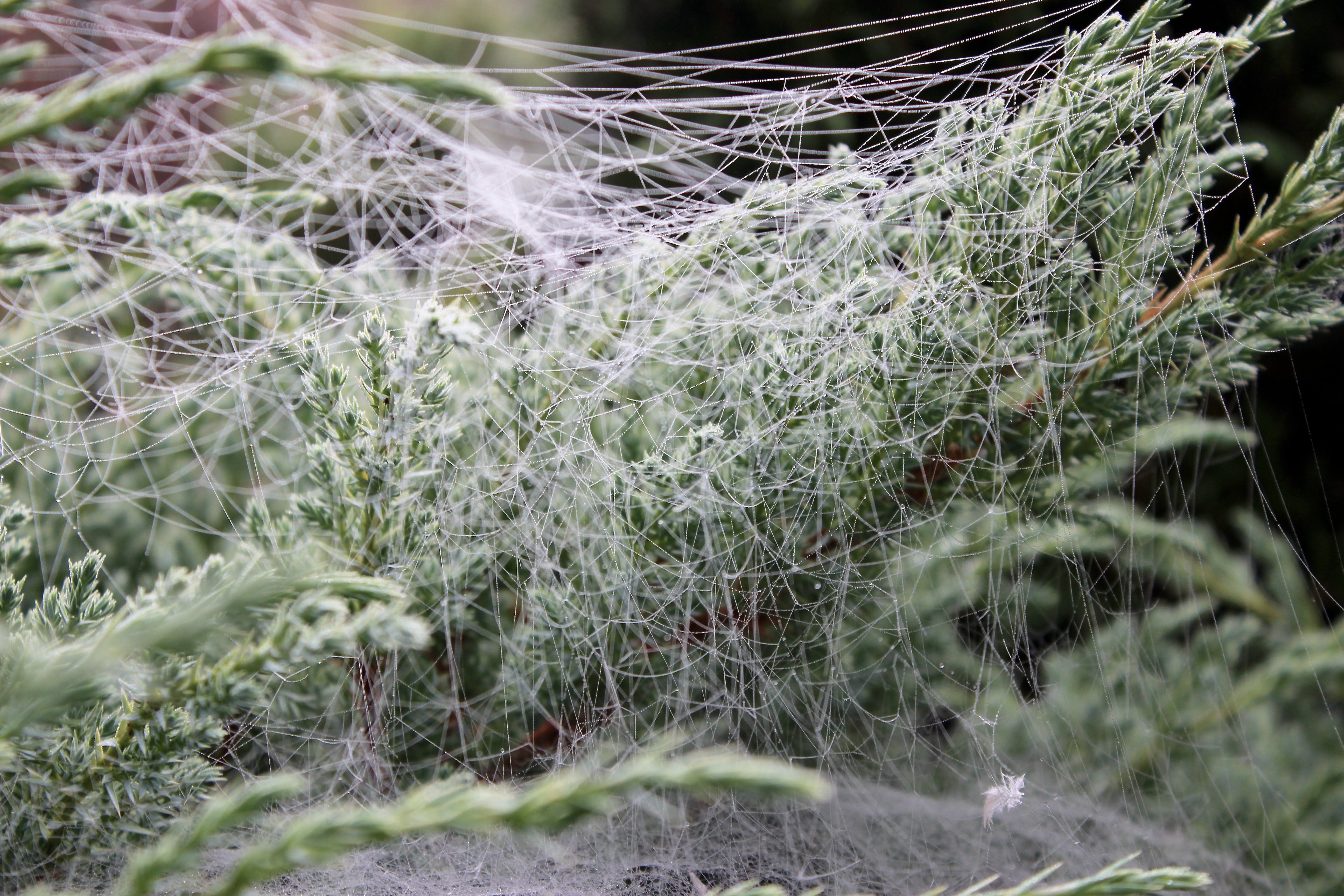 Free stock photo of ground frost, makro, spider, web