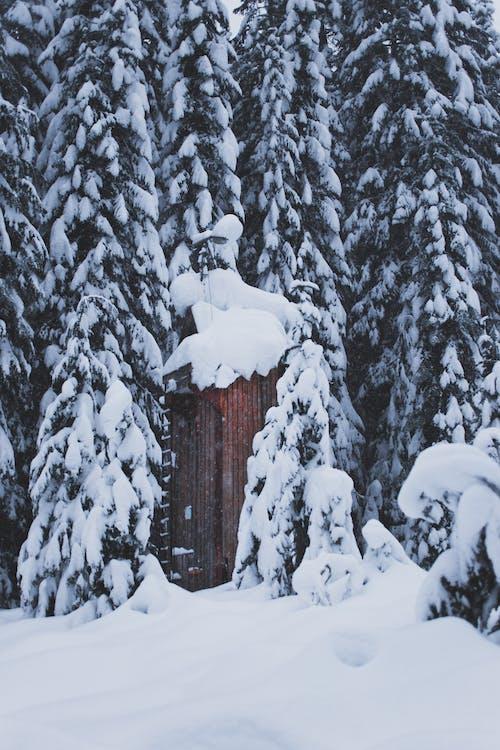 Ảnh lưu trữ miễn phí về bông tuyết, buồn rầu, hạnh phúc