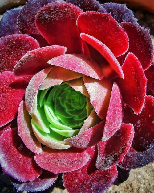 Free stock photo of beautiful flower, beauty of nature, dark green plants