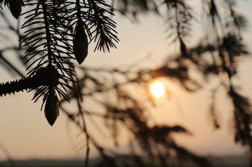 太陽, 日没の無料の写真素材