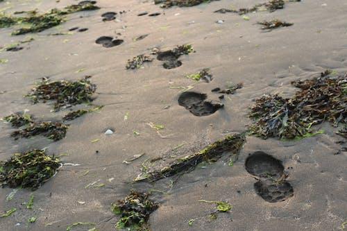 足, 足跡の無料の写真素材