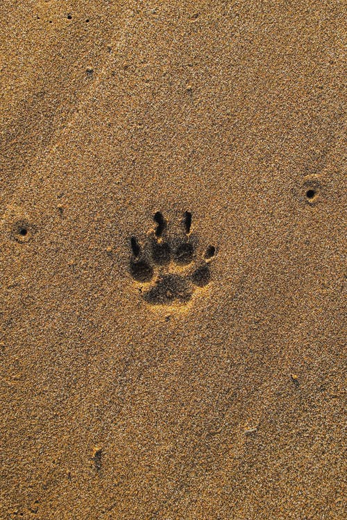 Brown Sand With Heart Shaped Sand