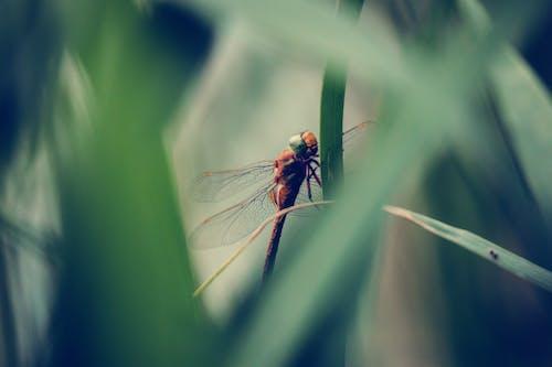 Fotos de stock gratuitas de foto macro, fotografía macro, insectos