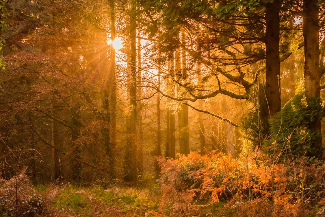 ast, bäume, dämmerung