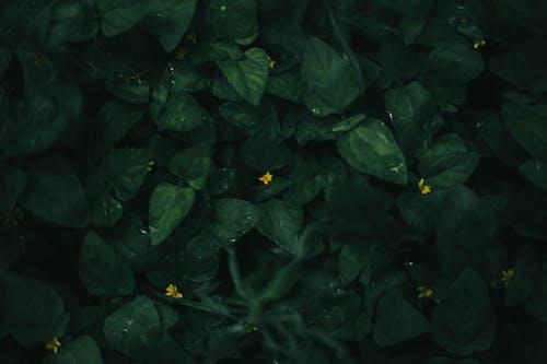 Free stock photo of close up, hojas, pastoral