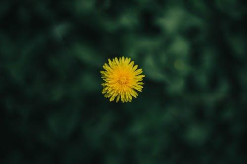Free stock photo of amarillo, close up, flora
