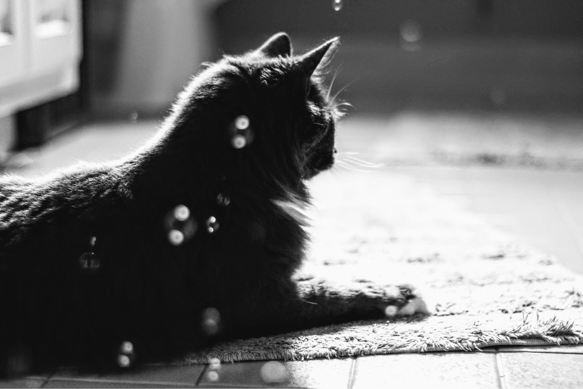 Grayscale Photo of Cat Resting on Rug