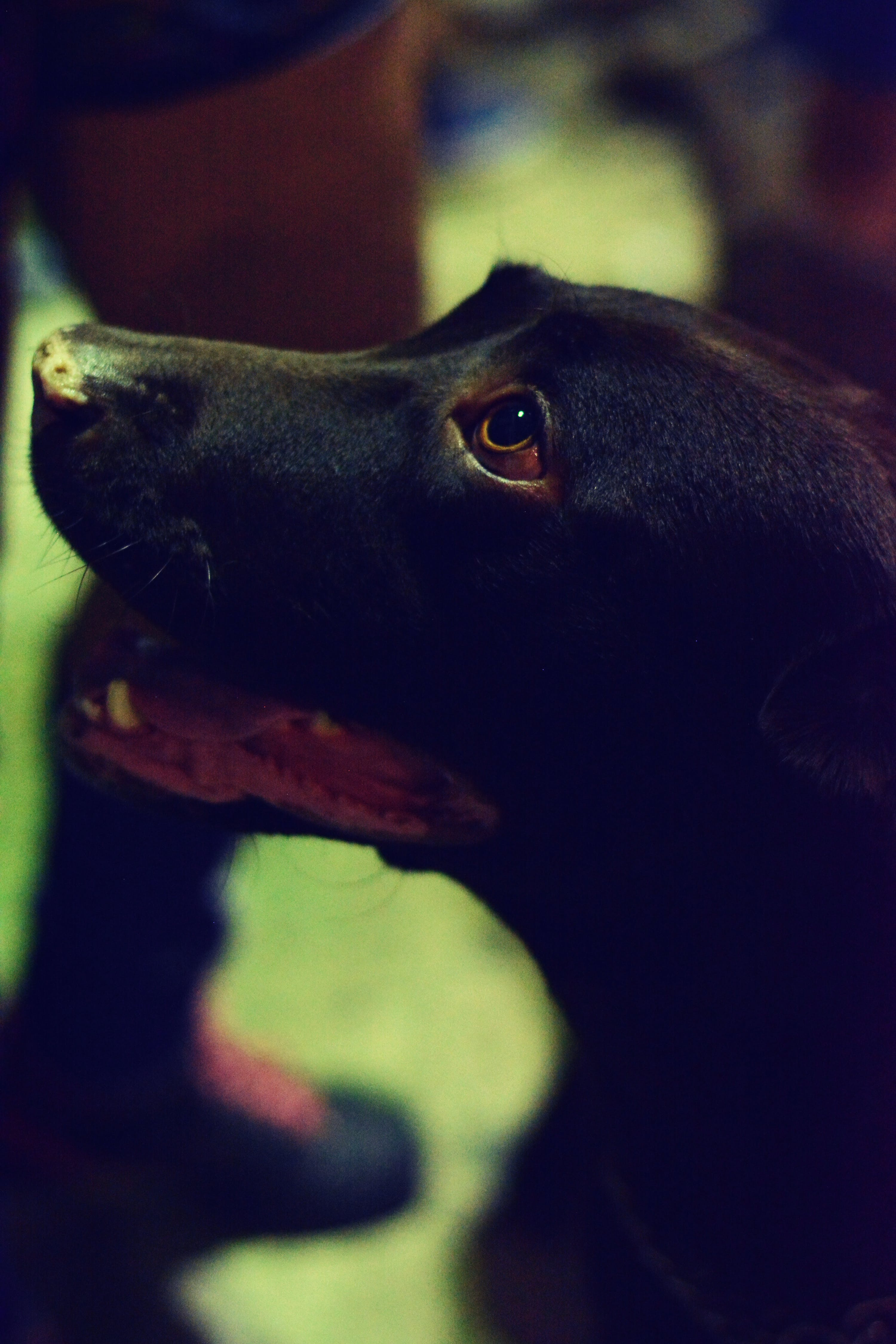 Free stock photo of animal, cute animals, dog, dogs