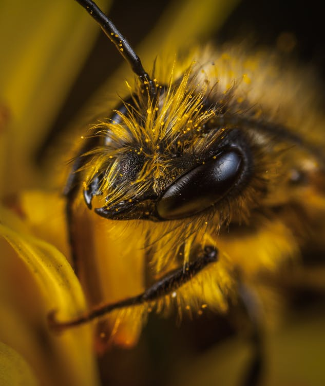 Close Up Photo of Yellow and Black Wasp