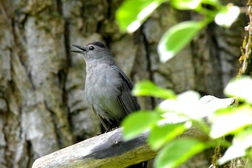 Free stock photo of avian, bird, branch