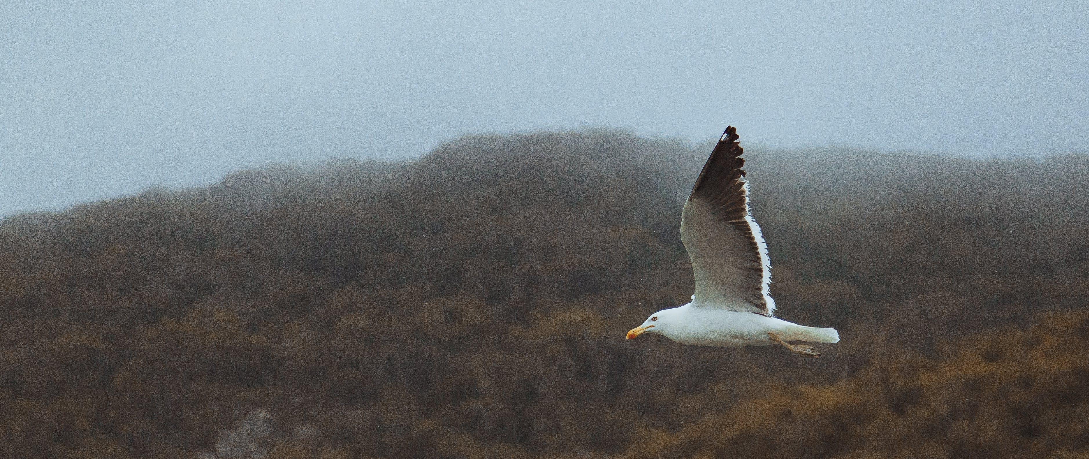 beyaz kuş, dağ, doğa, gökyüzü içeren Ücretsiz stok fotoğraf