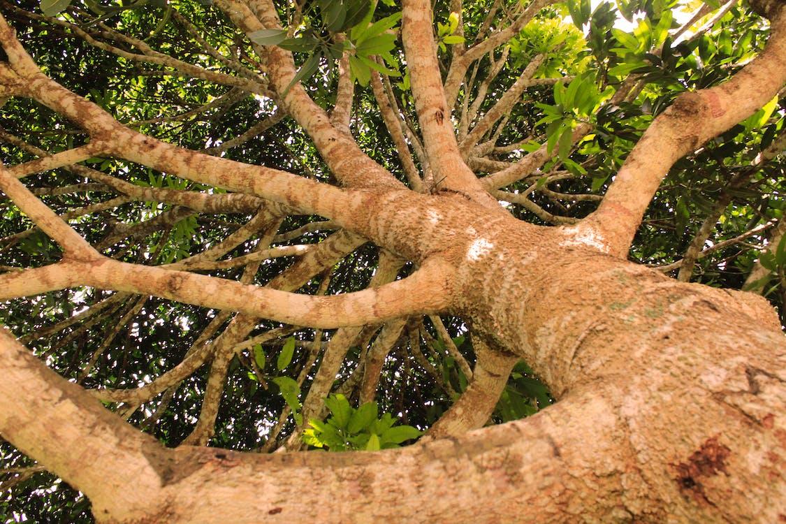 дерево, зелений, коричневий