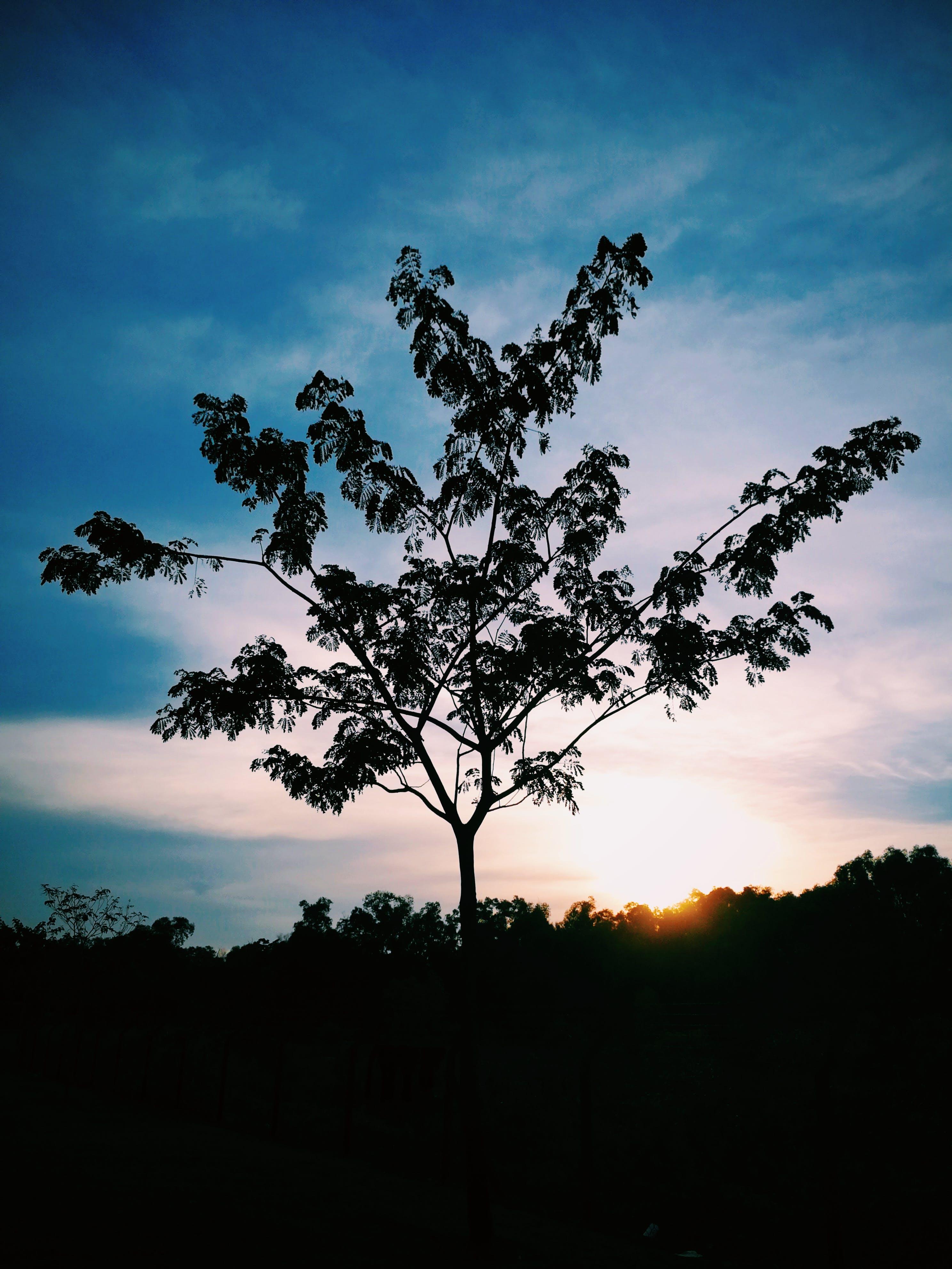 Darmowe zdjęcie z galerii z błękitne niebo, chmury, ciemny, drewno