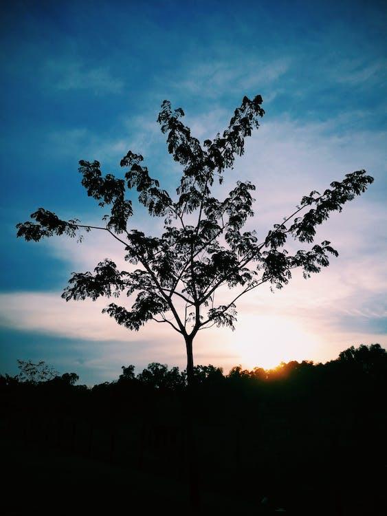 aften, bagbelyst, blå himmel