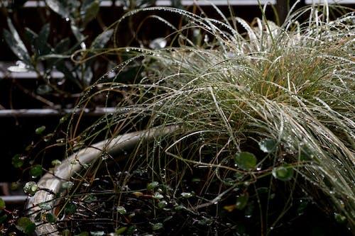 Free stock photo of blume, blumentopf, pflanze