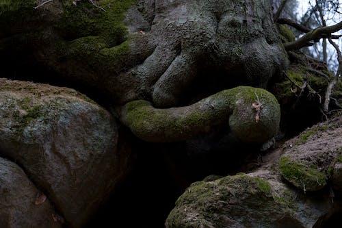 Free stock photo of baum, moos, stein