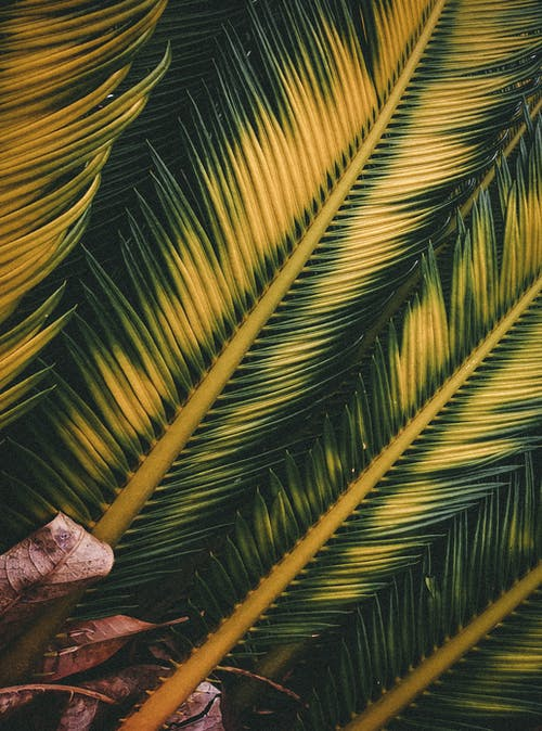 Free stock photo of abstract, bright, coconut