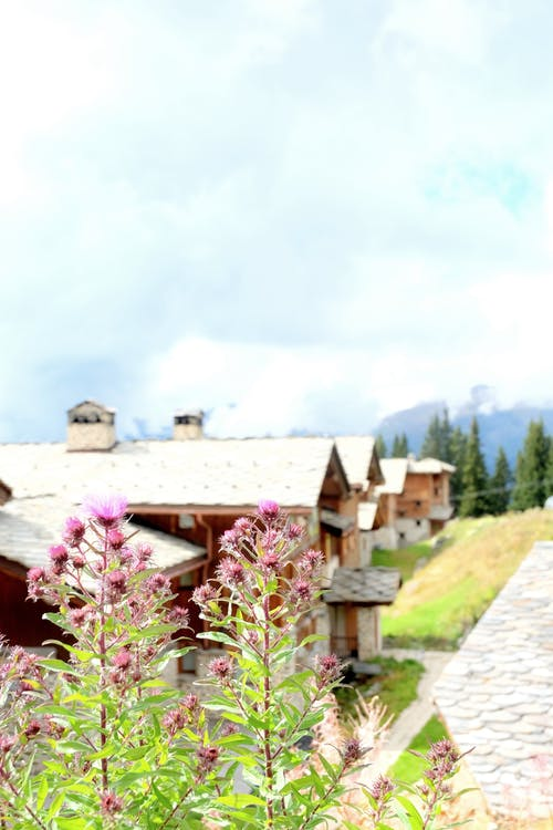 Free stock photo of flowers, italy, lodge, mountain