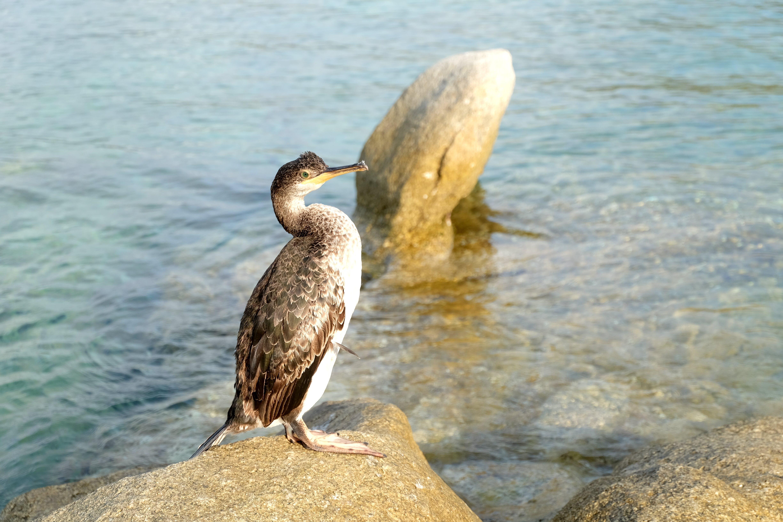 Free stock photo of animal, bird, corsica, nature