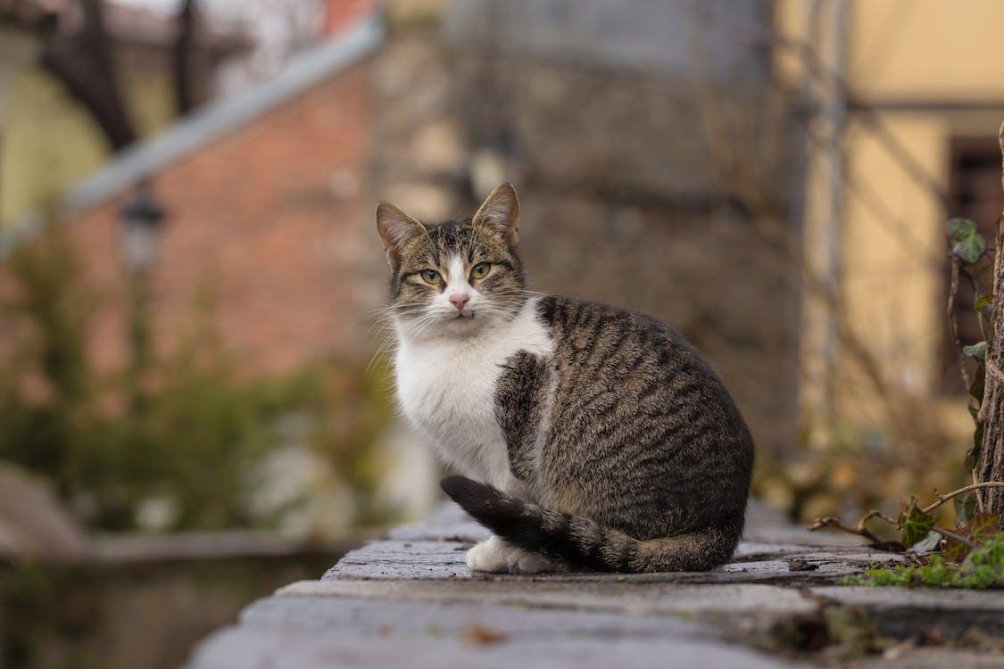 고양이, 고양잇과, 고양잇과 동물