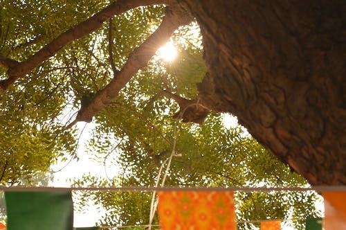 Photos gratuites de après-midi, arbre, brillant, hiver