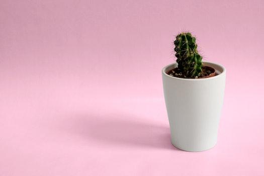 Kostenloses Stock Foto zu pflanze, topf, dekoration, kaktus