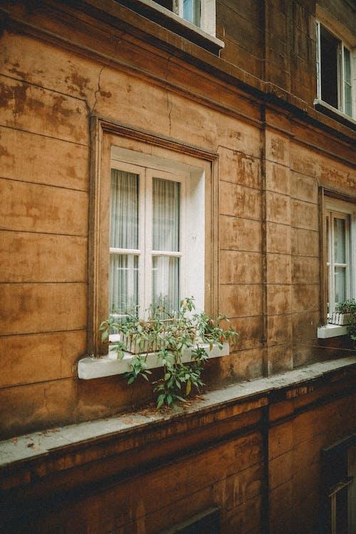 Бесплатное стоковое фото с архитектура, ботаника, в возрасте