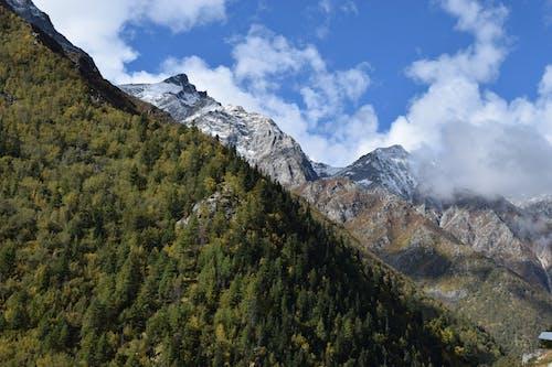 Бесплатное стоковое фото с гималаи, горы, деревья