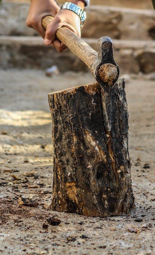 adam, ağaç gövdeleri, ağaç kabuğu, ağaç kütüğü içeren Ücretsiz stok fotoğraf