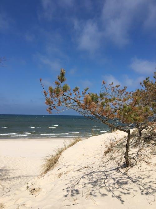 Green Tree on White Sand Beach