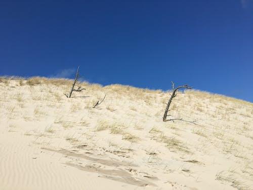 Free stock photo of arid, bare trees, beach