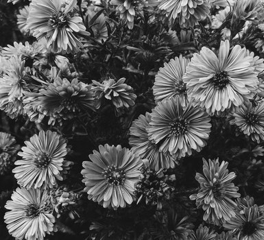 Free stock photo of black-and-white, art, flowers, pattern