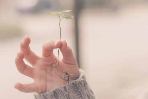 Foto profissional grátis de atenção, dedos, garoto, hojas