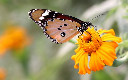 Shallow Focus Photo of a Brown Butterfly on Yellow Flower