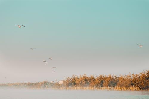 Free stock photo of 4k wallpaper, birds, birds flying