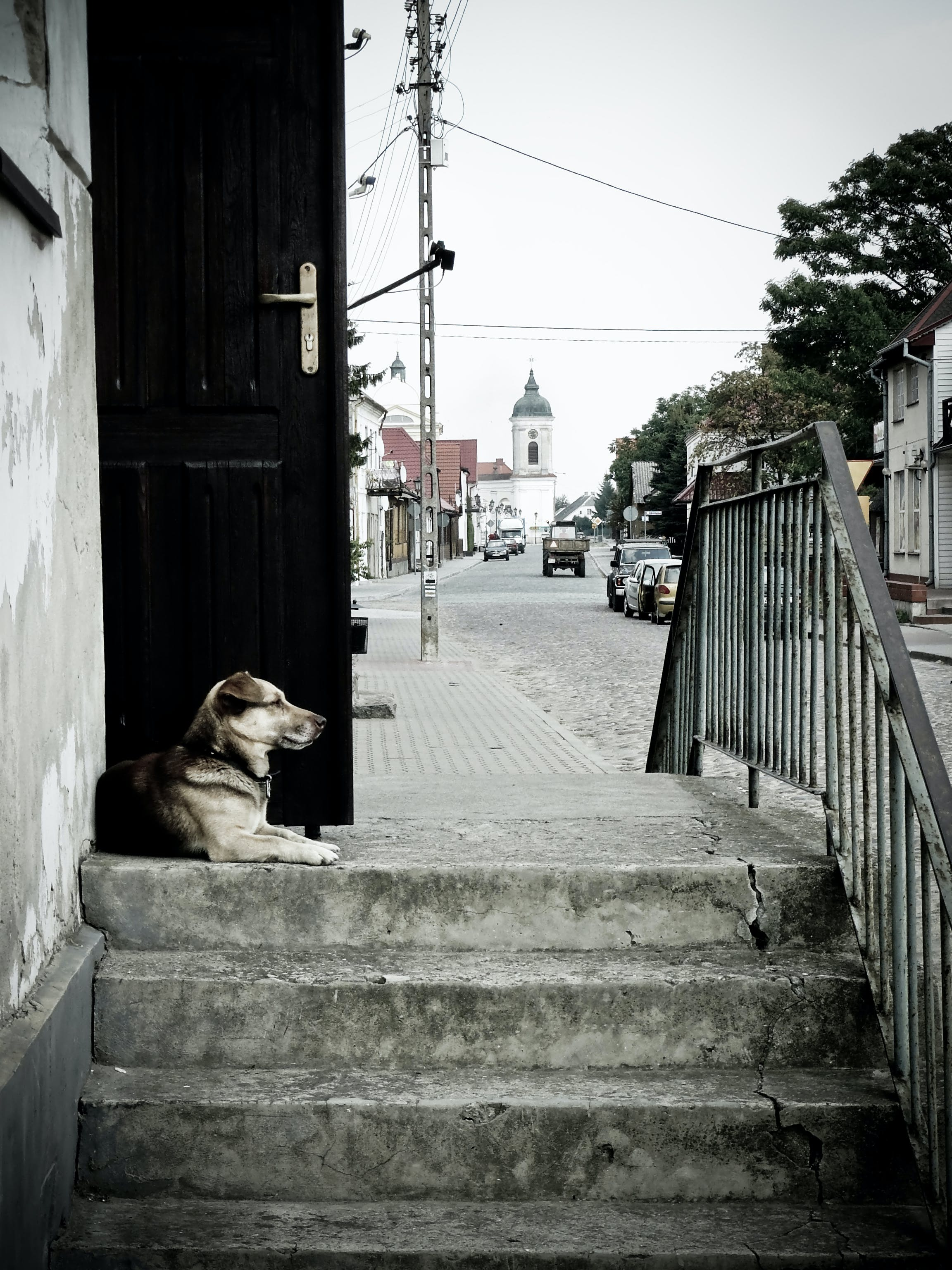 Free stock photo of street, dog, guard, watchdog