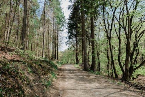 Immagine gratuita di alberi, albero, ambiente