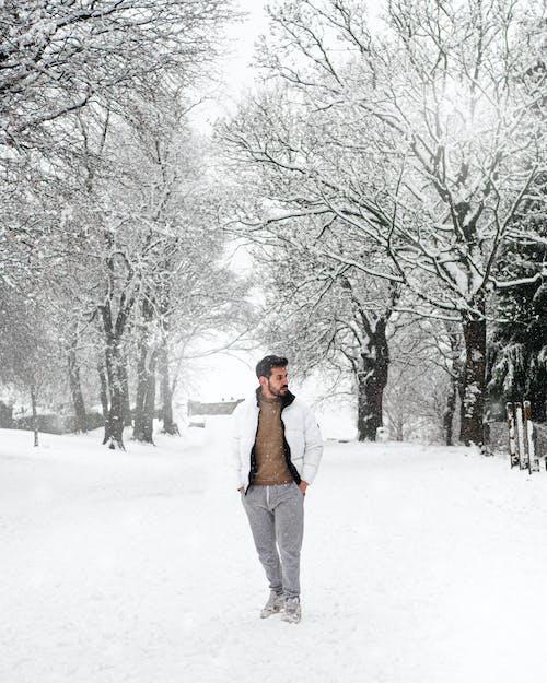 Imagine de stoc gratuită din anotimp, arbore, congelat
