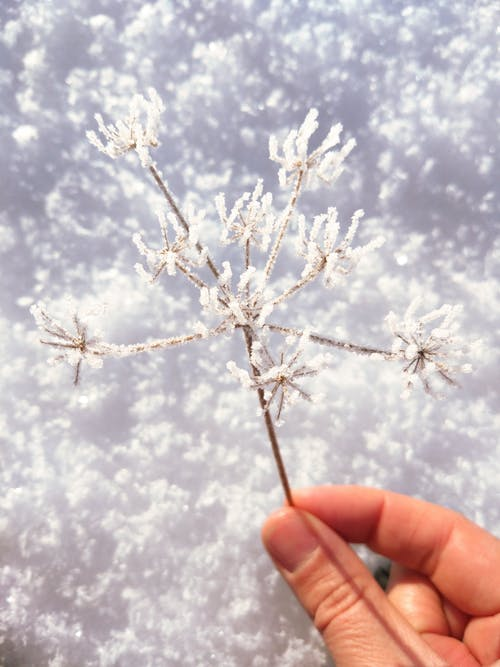 beyaz, bitki örtüsü, buz, buz tutmuş içeren Ücretsiz stok fotoğraf