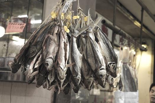 Kostenloses Stock Foto zu essen, straße, fisch, asien