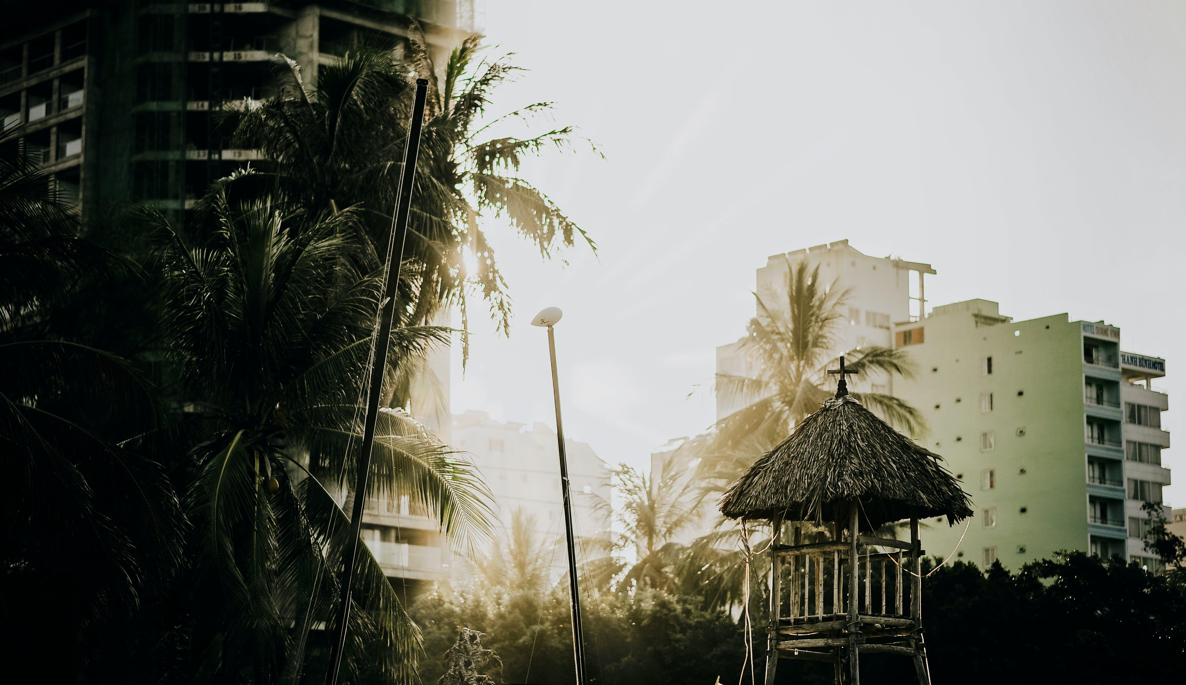 Foto d'estoc gratuïta de arbres, arquitectura, colors, edifici