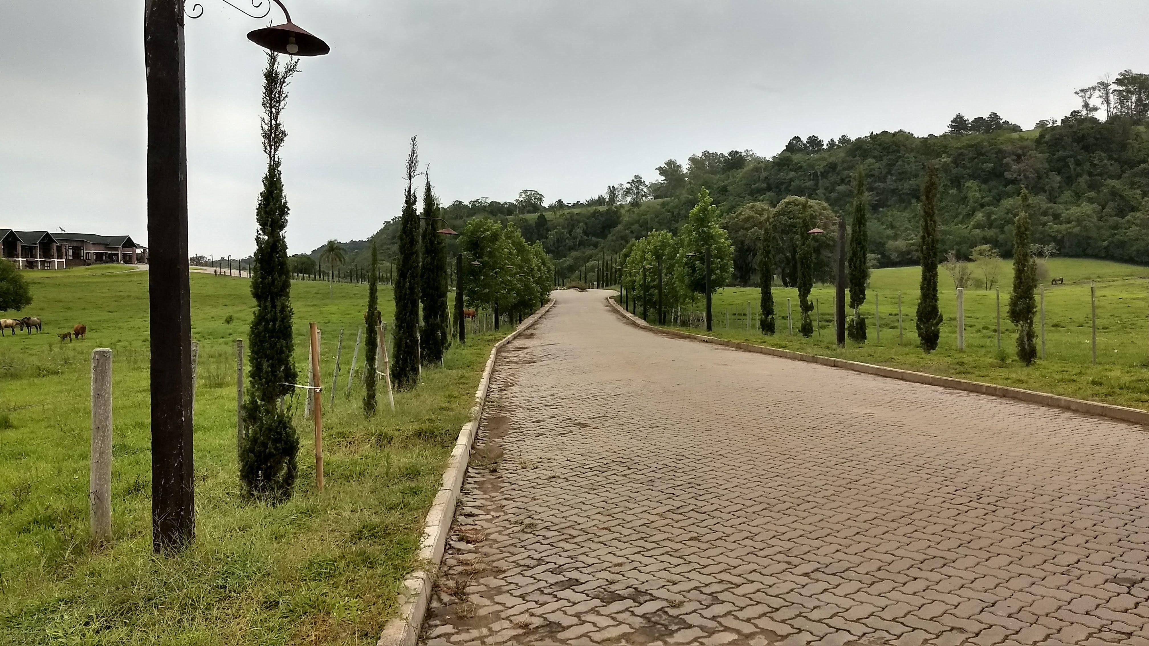 Free stock photo of farm, road