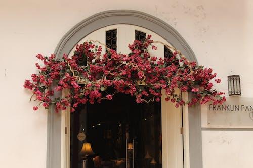 Free stock photo of hanging plants, open door, pink blossoms