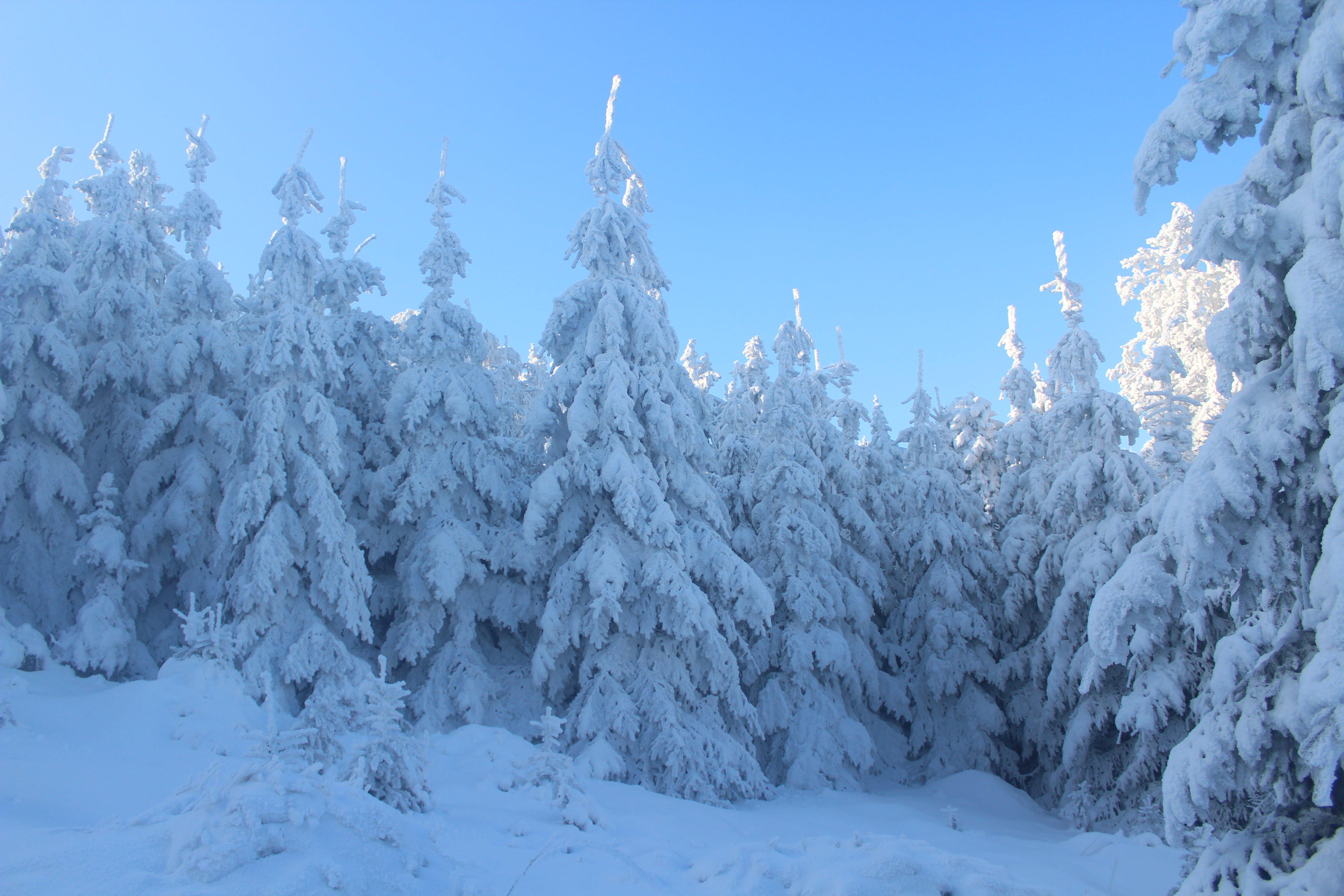 Gratis stockfoto met besneeuwd, bevroren, blauwe lucht, bomen