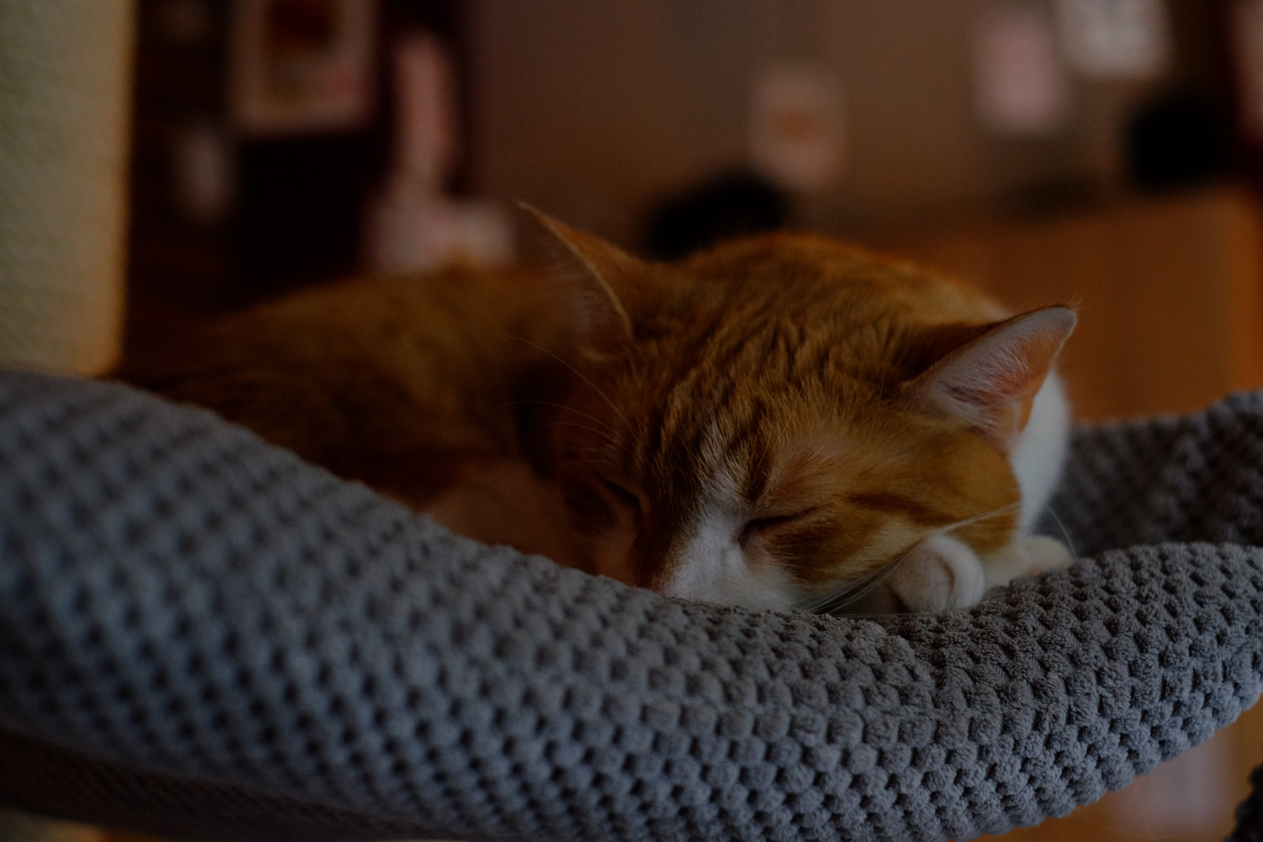 Orange Tabby Cat Sleeping on Gray Textile