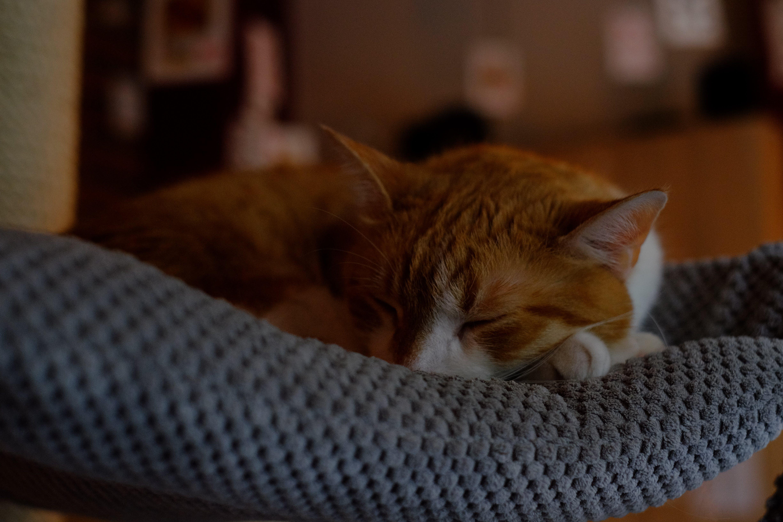 Orange Tabby Cat Sleeping on Gray Textile