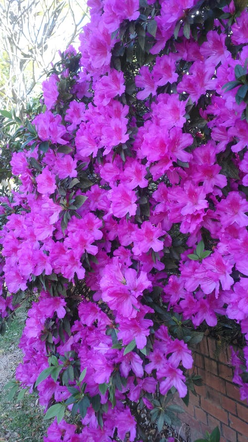 Free stock photo of flower, garden, hanging