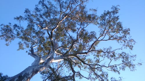 Free stock photo of blue, brisbane, sky, tree