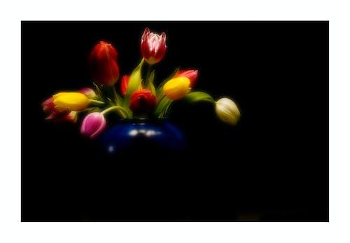 Imagine de stoc gratuită din lalele